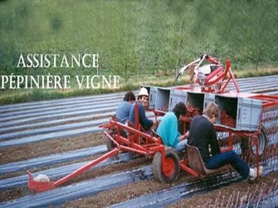 Assistance pépinière vigne