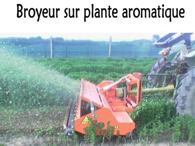 Broyeur sur plante aromatique